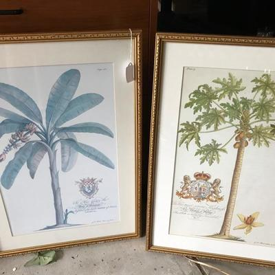 After G. D. Ehret Prints offset reproductions $75 each