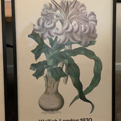 LOT 25 Framed Botanical Prints 3