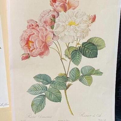 Unframed Rose Prints