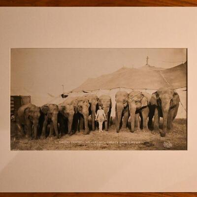 Elephants by Edward J. Kelty