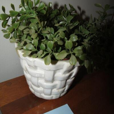 Greenery Plant with Planter Pot - Item # 18