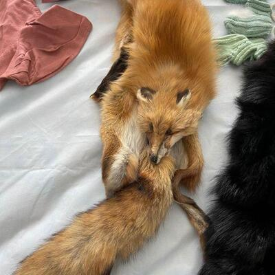 Red Fox Stole / full pelt