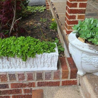 P1: Cement Planters with Succulents.