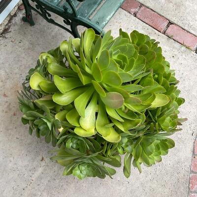 Pair of large potted plants in green ceramic pots