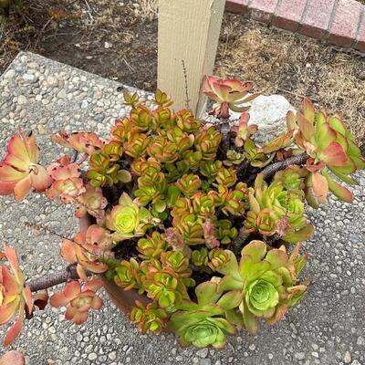 Potted succulent and terra-cotta pot