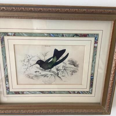 104 Pair of Antique French Matted Hummingbird Prints
