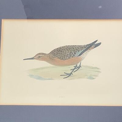 239  Set of Four Framed Bird Prints