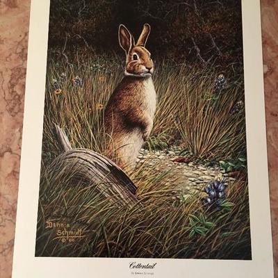 Cottontail By Dennis Schmidt LE; Signed; #898/1000