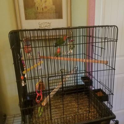 Pair lovebirds in cage $125