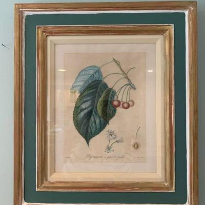 Original Botanical Engravings, 18c