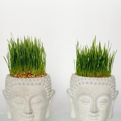 Garden items, cement and concrete planters, terrariums