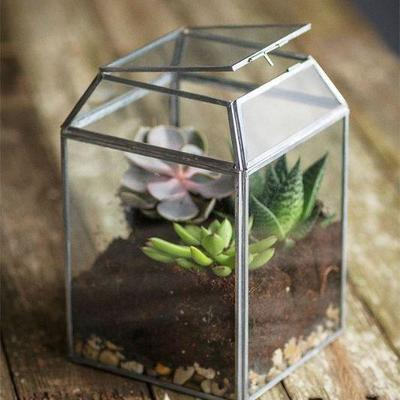 Glass terrariums and boxes for planting and display