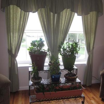 Stunning Window Treatments Plants and more