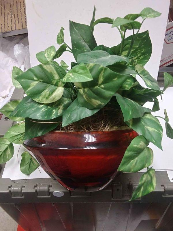 https://www.ebay.com/itm/124291246928	WL3081 VINTAGE RED GLASS BOWL WITH ARTIFICIAL PLANT ARRANGEMENT. BOWL 8 X 3 3/4 INCHES WL3 BOX 20	Buy-It_Now	 $25.00