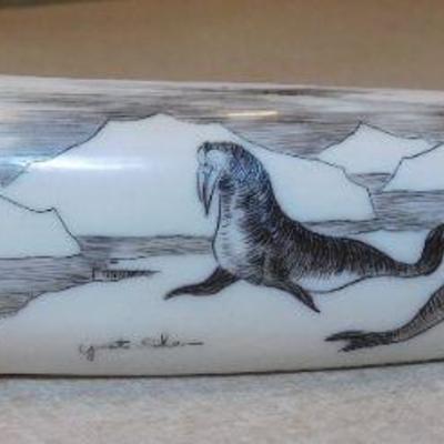 Scrimshaw of Walrus