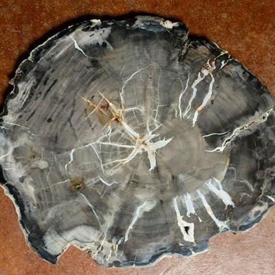 Assorted fossilized wood slabs, priced by kilogram and on view at studio
