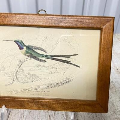Antique Hummingbird Prints - Great Collection To Choose From