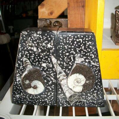 Ammonite Bookends
