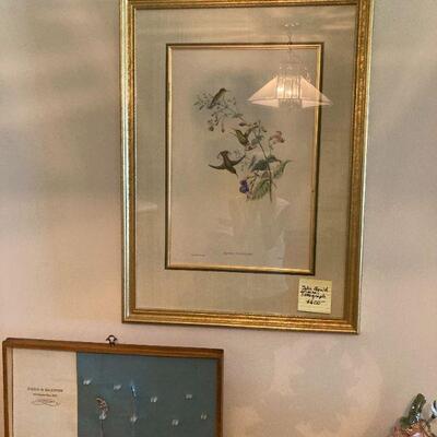 John Gould botanical print