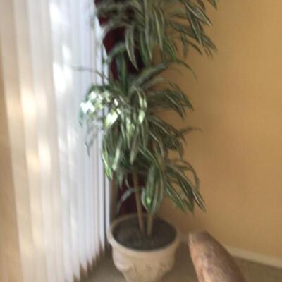 Silk tree, $15