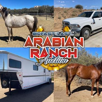 Arabian Ranch Estate Auction